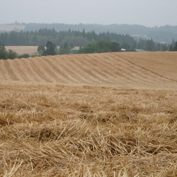 Partially Harvested Field